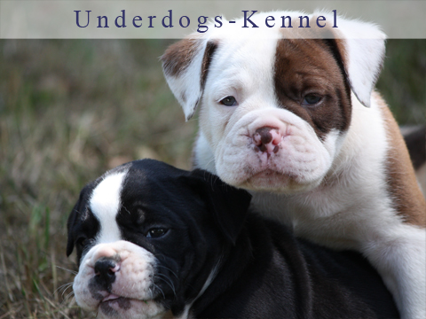 Dogs made by Underdogs-Kennel